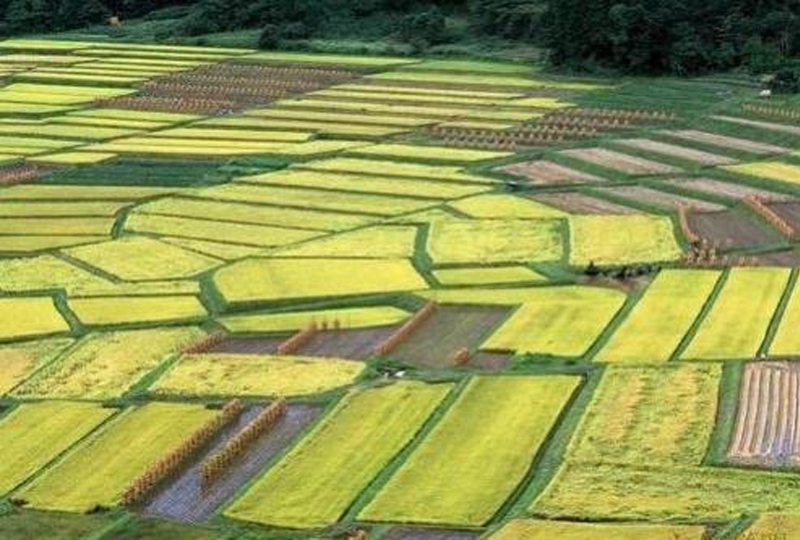 红外热成像仪成像技术走智慧进农业生产